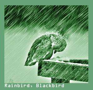 http://www.blackbirds.tv - #Rainbird #Blackbird