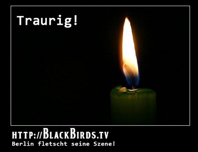 Traurig! #blackbirdsTV #TTT #Tulipstagram #Banner
