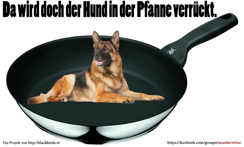 Da wird doch der Hund in der Pfanne verrückt! #Musikerwitze